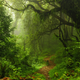 a lush forest