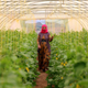 A displaced Iraqi woman, who fled violence in the northern city of Tal Afar, tends to the cucumber vines inside a plastic greenhouse at the Bahrka refugee camp located in the Kurdish autonomous region in northern Iraq on May 20, 2017.