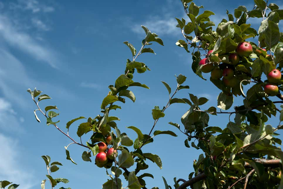 Farm calls police on Black couple it believed stole 6 apples