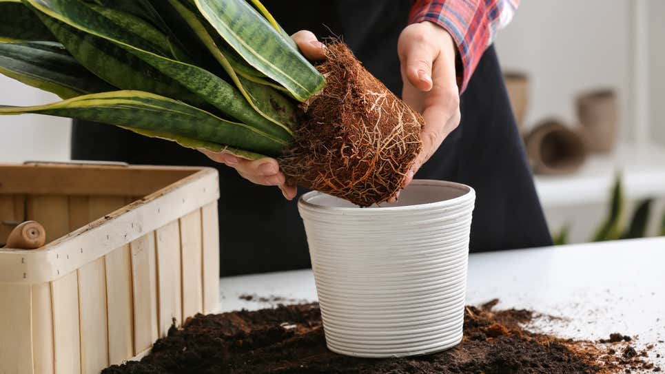 How to Tell If It's Time to Repot Your Plant