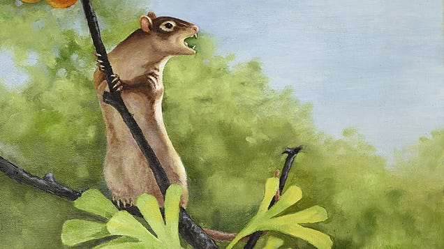 This Newly Discovered Cretaceous Mammal Had Really Freaky Ears