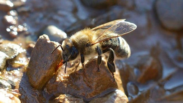 I Have to Tell You Something Very Important About Honeybees