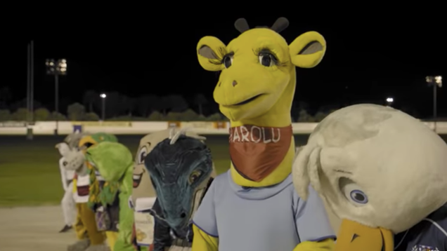 Allow the 2009 New Zealand Mascot Race scandal to delight and confuse you