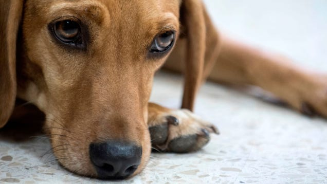 Animal Abuse Including  Crushing  and  Burning  Is Now a Federal Felony
