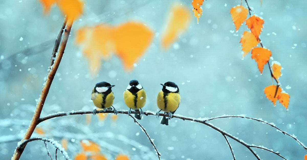 How To Join The Great Backyard Bird Count   Lifehacker ...
