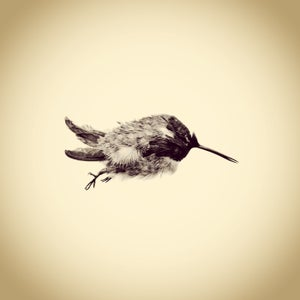 Only an iPhone Was Used to Create This Archive of Backyard Wildlife