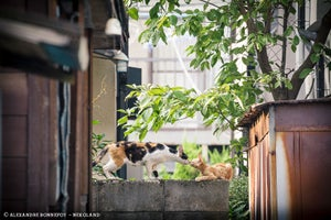 The Alley Cats of Japan Look Pretty Badass