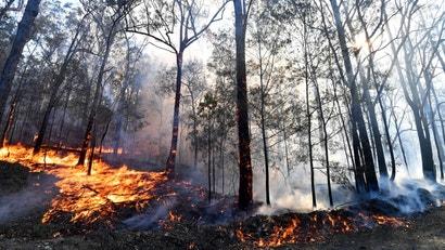 Australia's Terrifying Bushfires Remind Us Climate Change Is Here