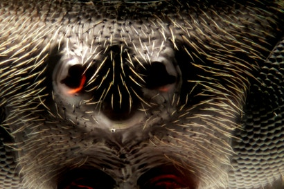 I've never seen macroscopic images as incredibly sharp as these ones