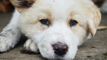 What To Do When You've Found A Lost Dog Or Cat