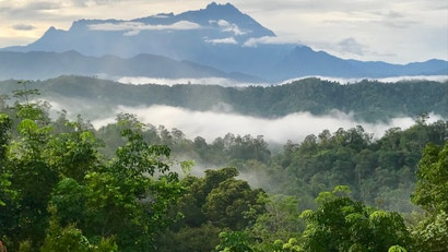 Deforestation Is A Death Sentence For Tropical Forest Animals