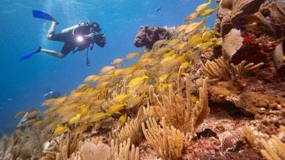 We're Now Seriously Considering Geoengineering Coral Reefs ...