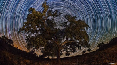 It Looks Like You Could Climb This Celestial Tree To Space