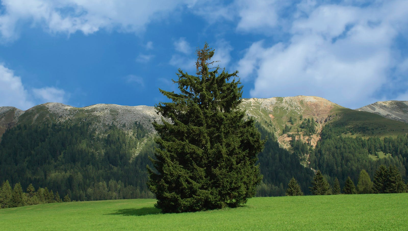 Majestic Pine Recruited For Yosemite By National Park Headhunters