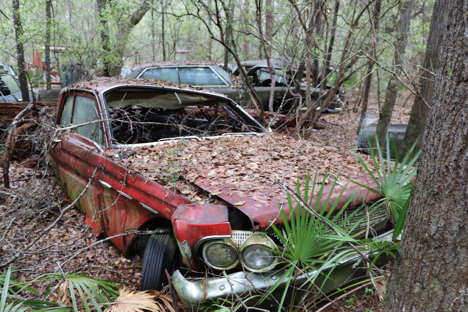 Illustration for article titled GHOST CARS ROTTING IN THE MISSISSIPPI SWAMP