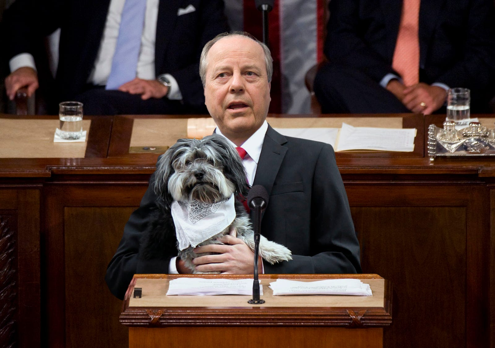 New Bipartisan Law Would Make Dog Neckerchiefs Mandatory