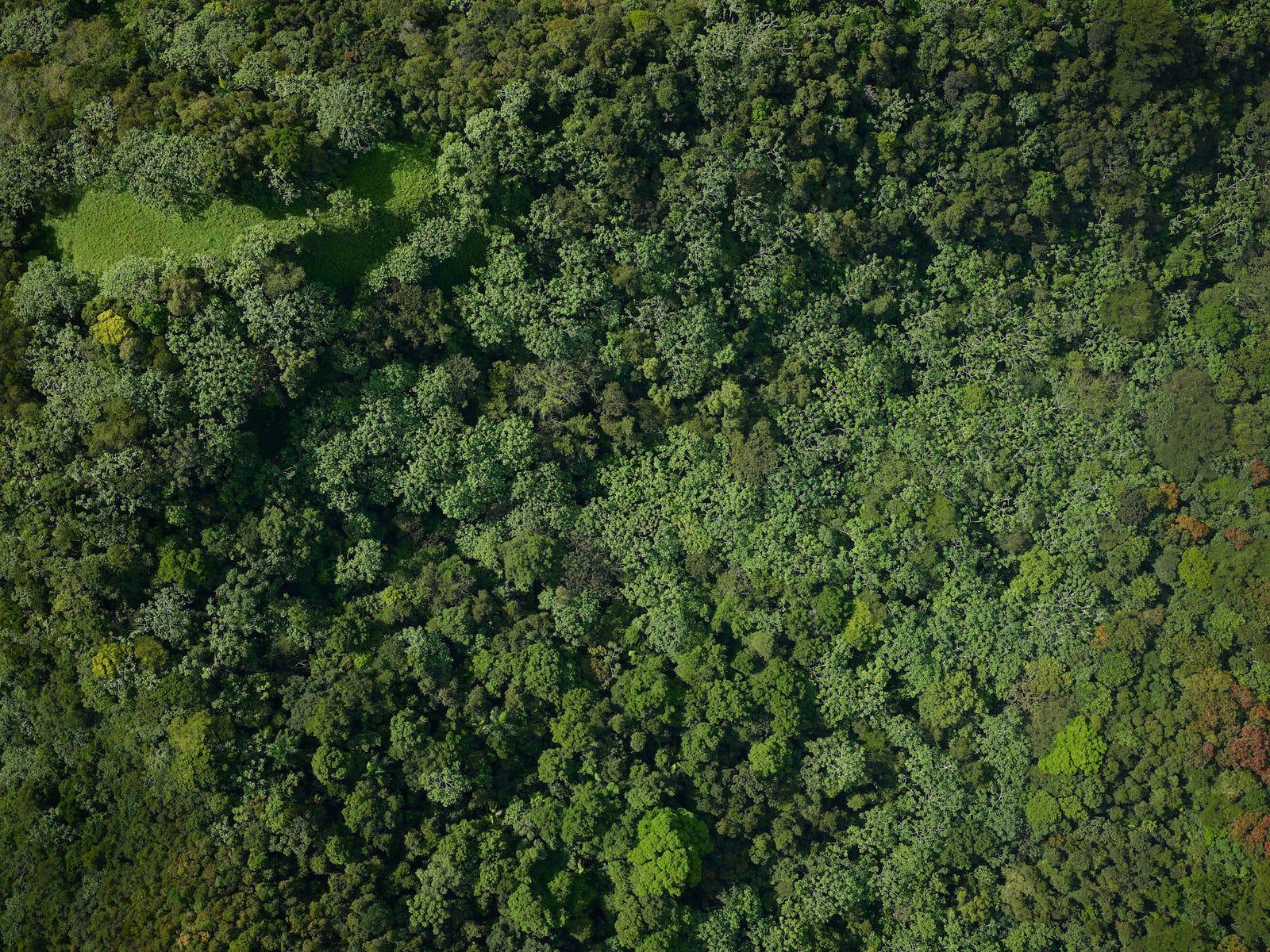 The El Yunque rainforest near El Verde field station, 2017