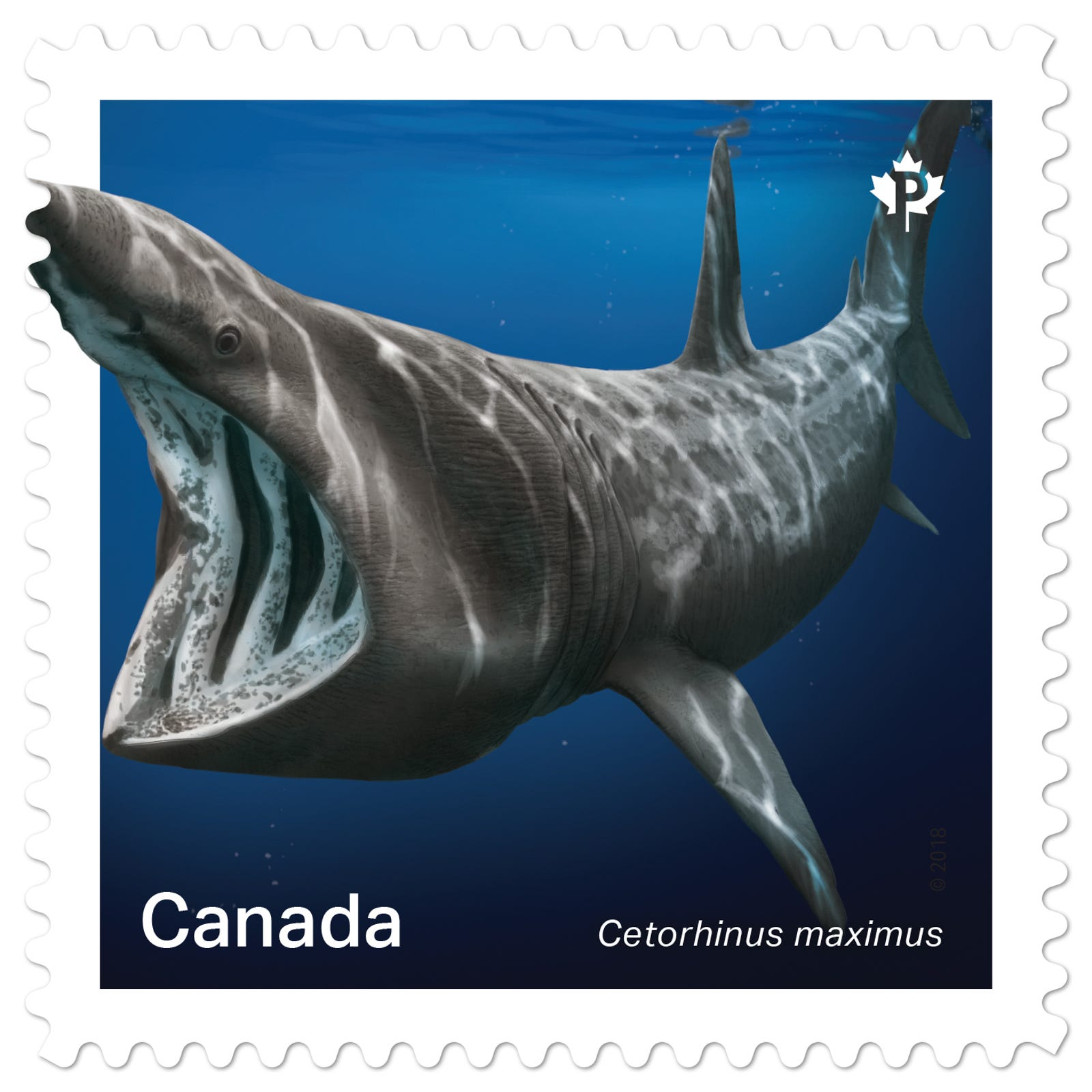 A basking shark