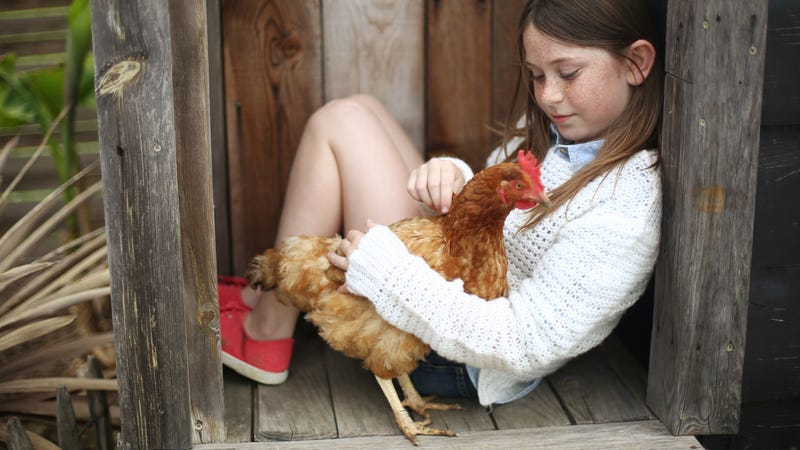 Get Your Kids a Pet Chicken