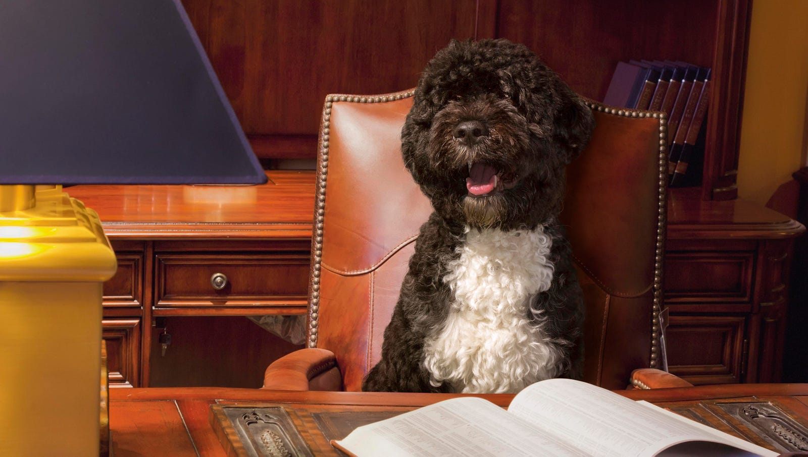 Departing Bo Obama Lands K Street Lobbyist Position