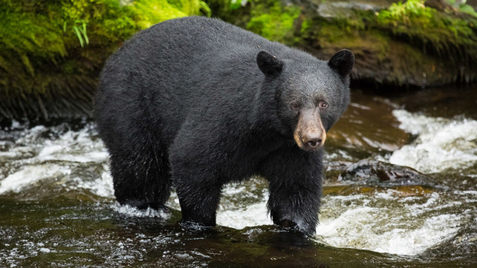 Yosemite Closed Indefinitely After Bear Spotted In Park