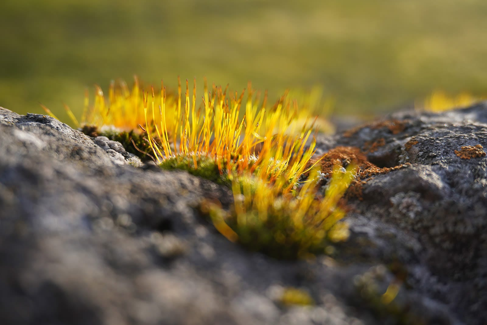 The hairs on this small patch of moss have been captured with the automatic focus. The good thing about the 6100's AF is that it lets you quickly shift focus from one group of hairs to another in just a few seconds. All you have to do is move the frame a bit and focus again. Focusing has stopped being tortured and has turned into a game.