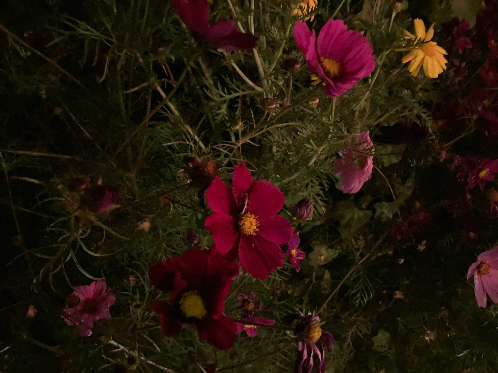 iPhone SE shot of flowers at night