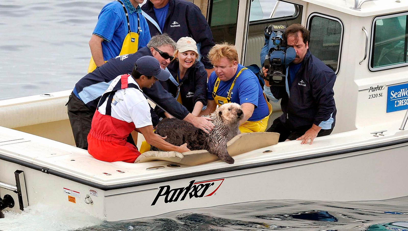 Rehabilitated Otter Released Back Into Food Chain