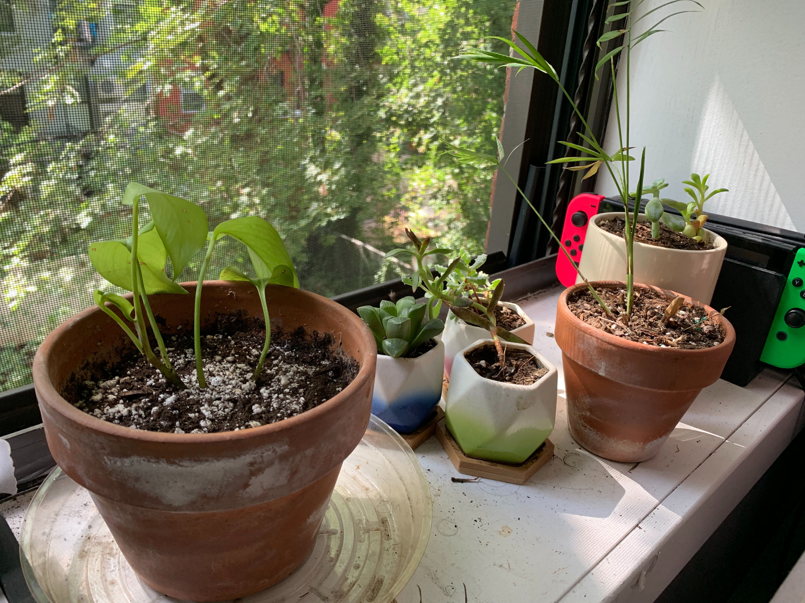 For frame of reference, here are my darling plants.