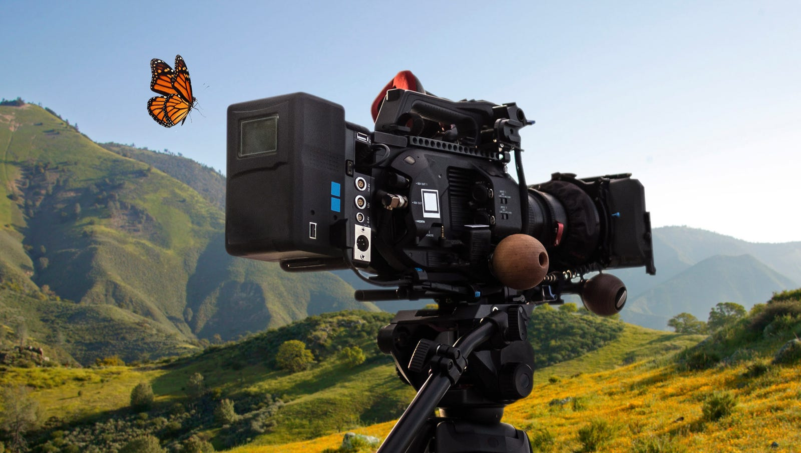 Monarch Butterfly Makes Directorial Debut On 'Nature' Episode
