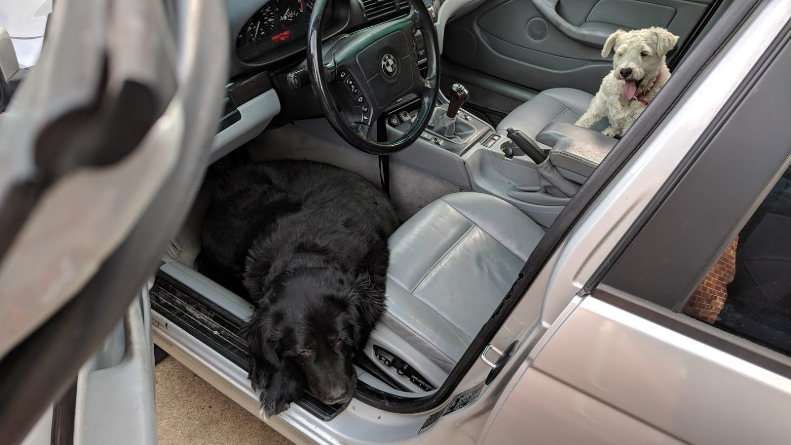 Doggos love manuals.