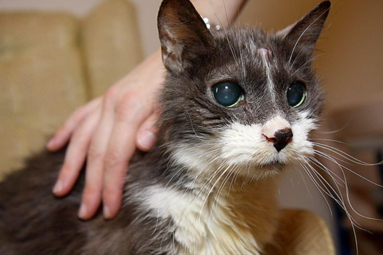 Cat Refuses To Die