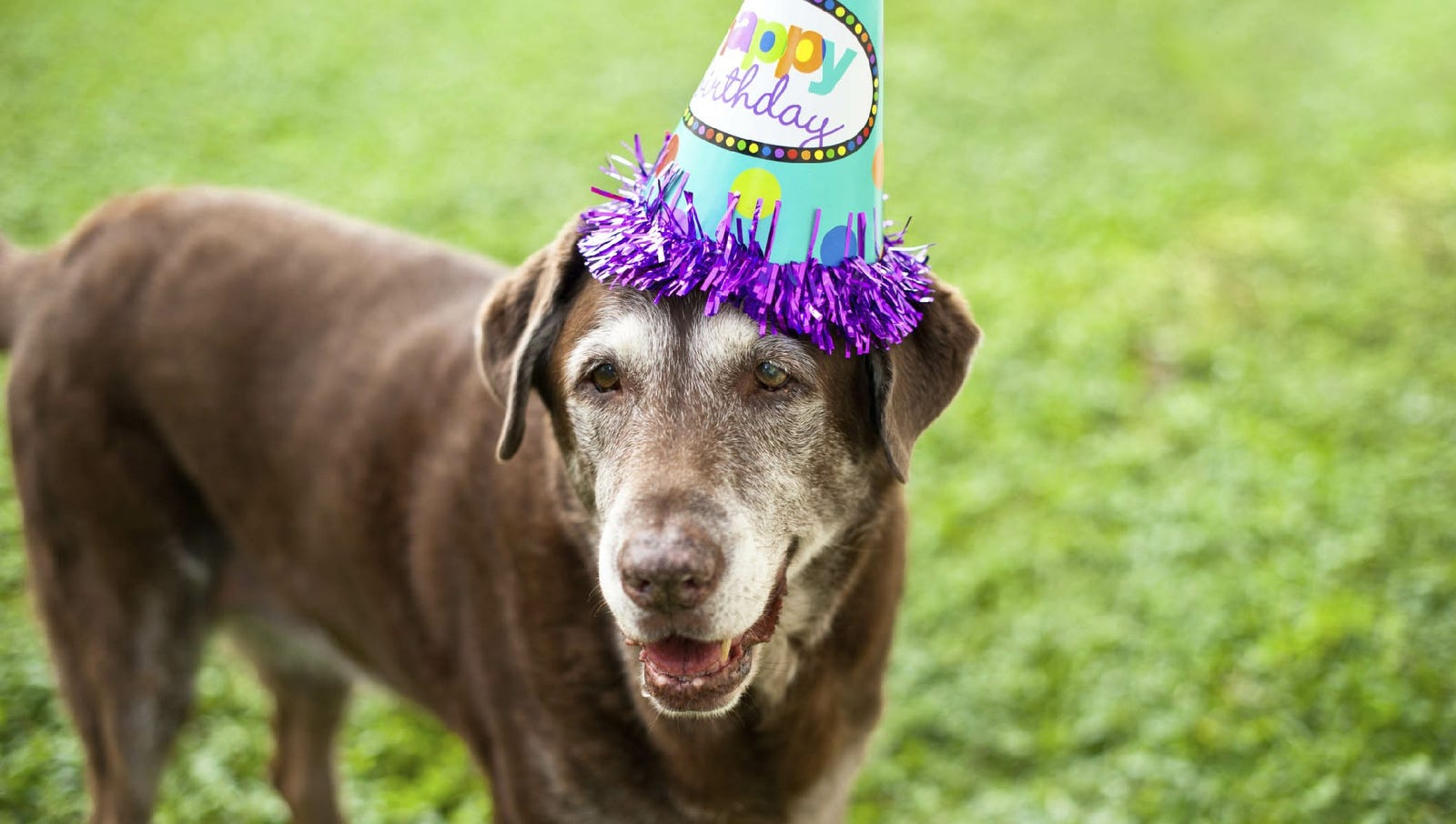 Can't tell Peanut he doesn't know how to party. Guess how old this lovable mutt just turned in dog years!