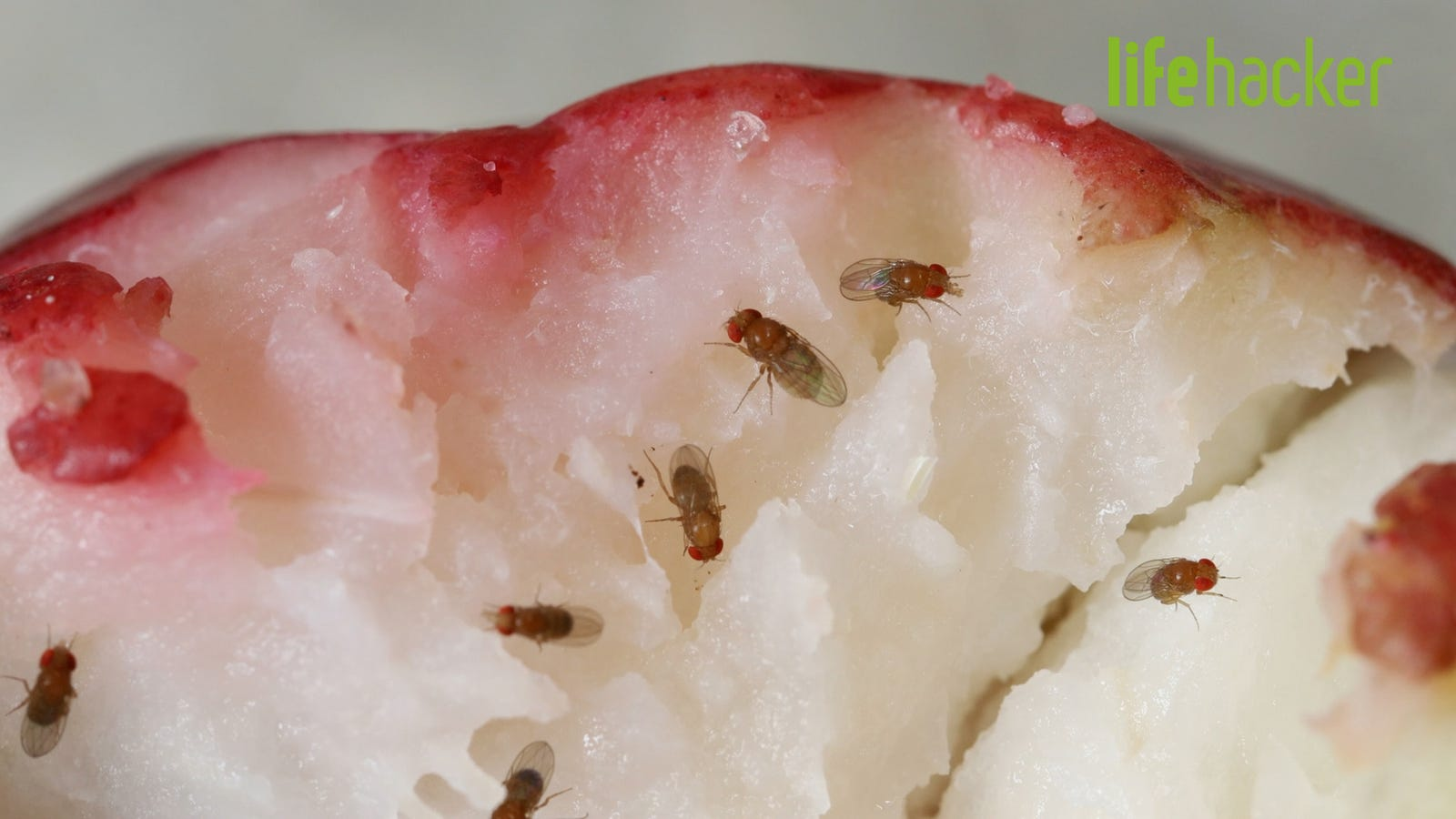 How To Get Rid Of Fruit Flies In Your Kitchen