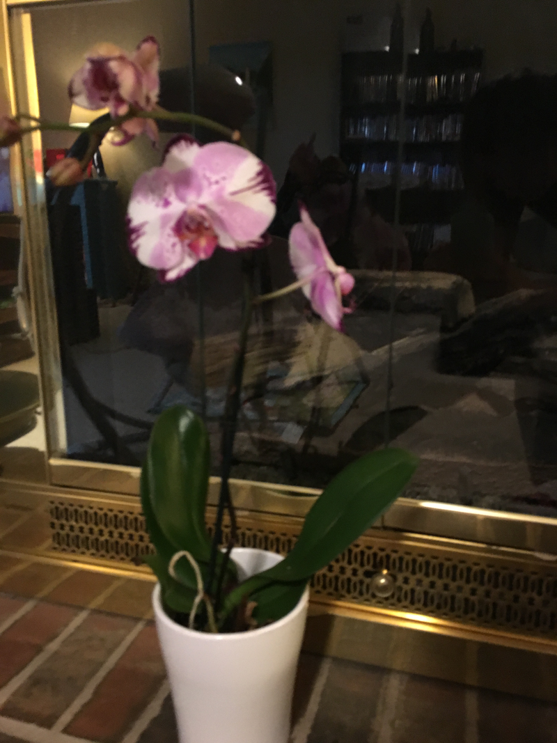 How to Keep a Trader Joe\'s Orchid Alive—or Get It to Bloom Again