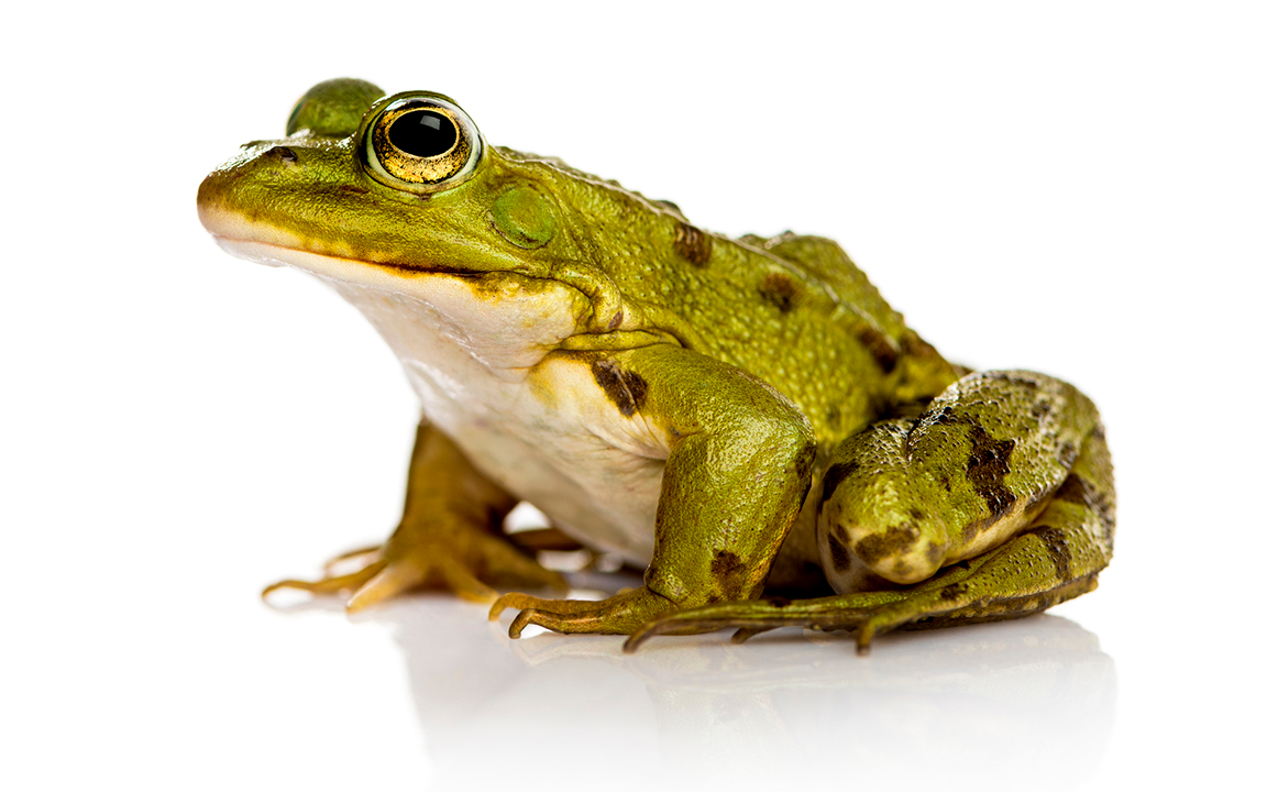 You re here to acquire frogs. 2c602962f