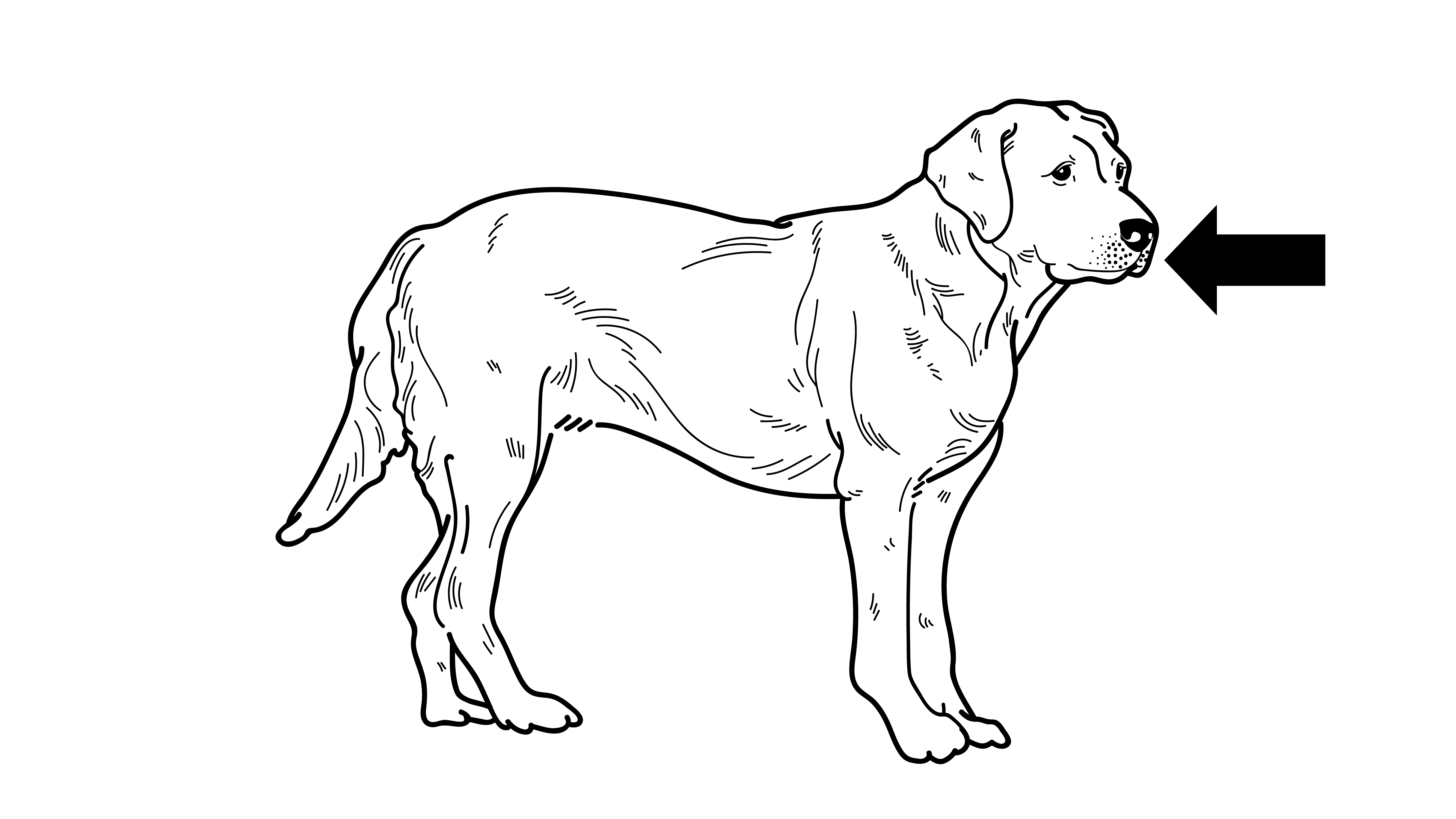 how well do you know the 6 parts of a dog