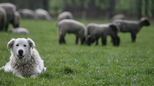 New Theory Explains Why Europe s Original Dogs Vanished