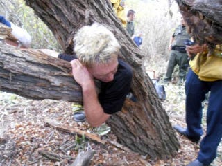 Illustration for article titled Man Not Named Lee Corso Gets Stuck Inside A Tree