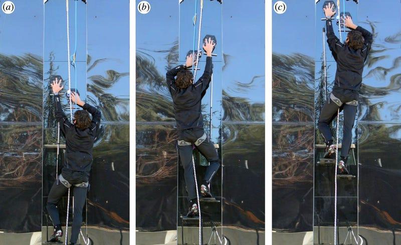 Científicos prueban un material adhesivo para escalar como Spider-Man