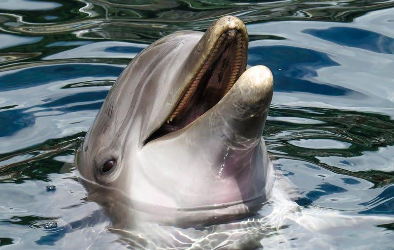 Un delfín no relacionado con el caso.