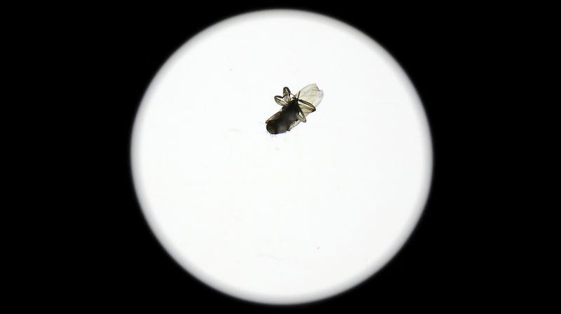 Illustration for article titled How Did This Full-Grown Fly End Up Inside a Sealed $2,000 Camera Lens?