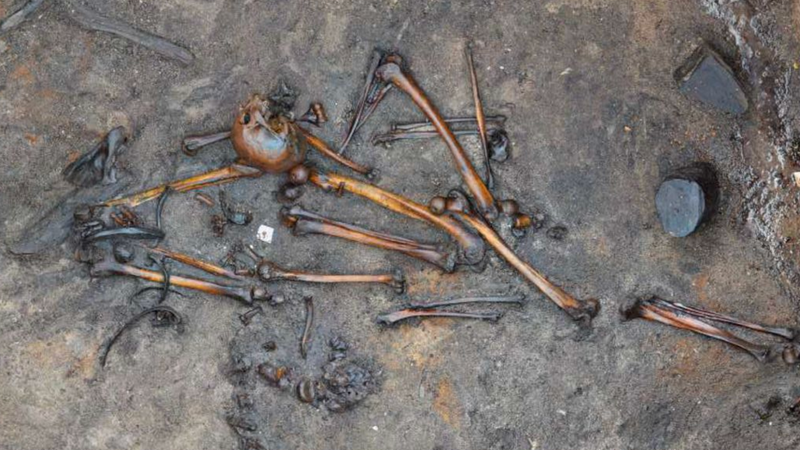 A scattered assemblage of bones found at the Denmark site.