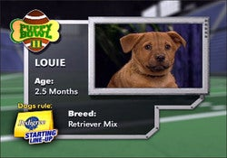 Illustration for article titled Refreshingly Free Of Jim Nantz, It's Puppy Bowl III