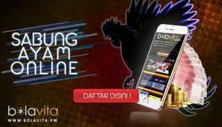 Illustration for article titled Lihat Kemampuan Ayam Bangkok Jadi Juara Sabung Ayam Online