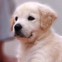 Make A Pet Safe Carpet Deodorizer
