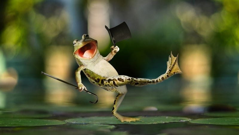 Illustration for article titled Herpetologists Discover Species Of Frogs That Evolved To Spontaneously Grow Top Hat And Cane