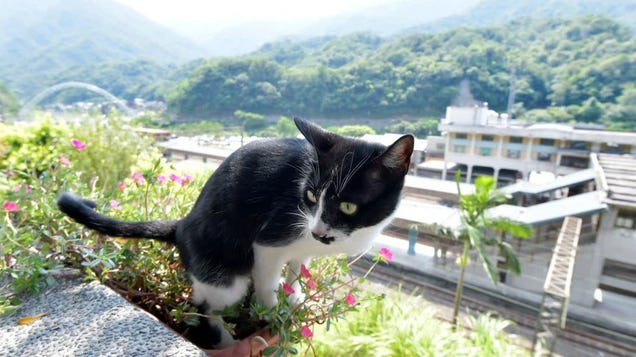 Welcome to Taiwan's Houtong Cat Village, a village with many, many cats