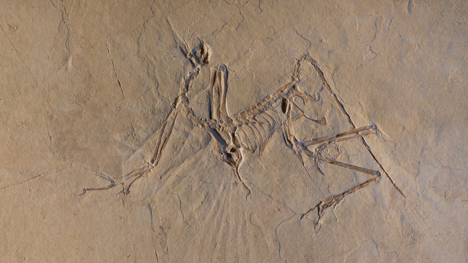 New Evidence Suggests Archaeopteryx Could Fly—We Just Don't Know How