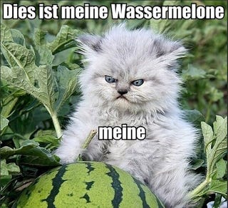 Illustration for article titled Just A German Cat Guarding A Watermelon